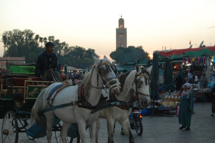 1000-15-Marrakech-137